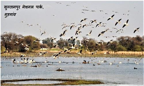 सुल्तानपुर नेशनल पार्क, गुड़गांव